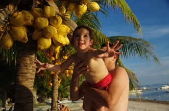 Picking coconuts